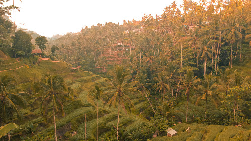 Tegallalang Rice Terraces in Ubud, Bali, Indonesia
